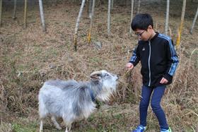 お子さんとヤギ